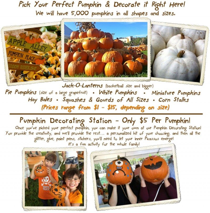 Come and pick your own pumpkin at the Coconut Grove Pumpkin Patch Festival. Learn more here, get a discount code and enter to win tickets! Pumpkin Patch Pumpkins