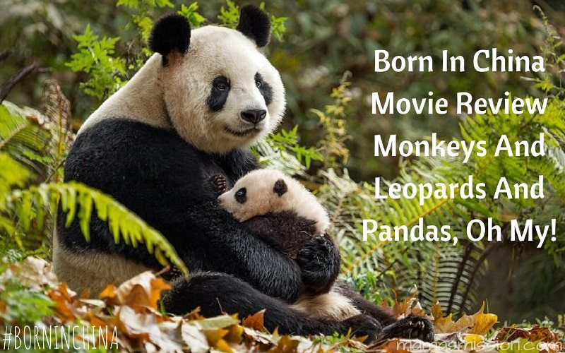 This Born In China movie review will have you awwing and ohhing all the way through. Learn all about the wild animals of China and their families!