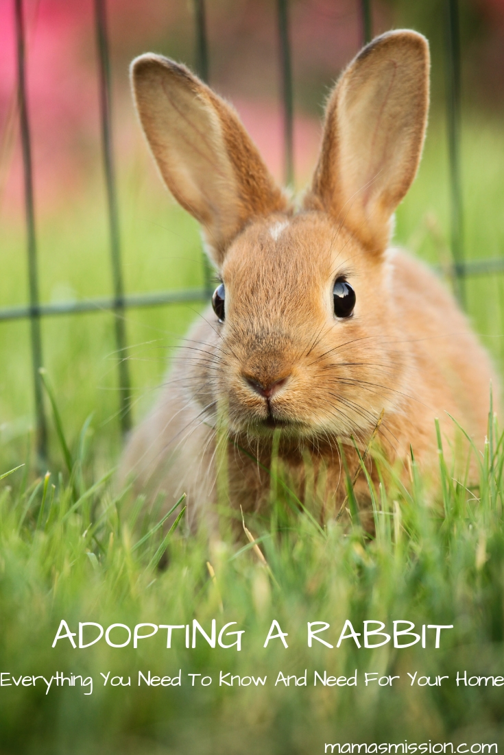 If you are considering adopting a rabbit, there are many factors to take into consideration. Here is everything you need to know about adopting a rabbit.