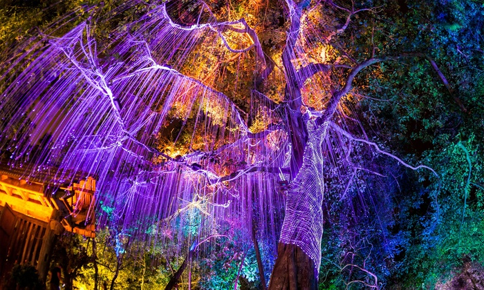 Nightgarden at fairchild tropical botanic gardens extended - Fairchild tropical botanic garden hours ...