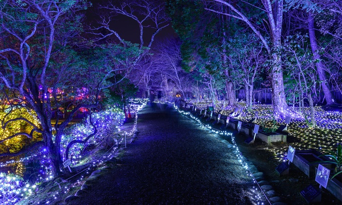 Don't miss your last chance to see the stunning illumination projections of The NightGarden at Fairchild Tropical Botanic Garden through January 11, 2019.